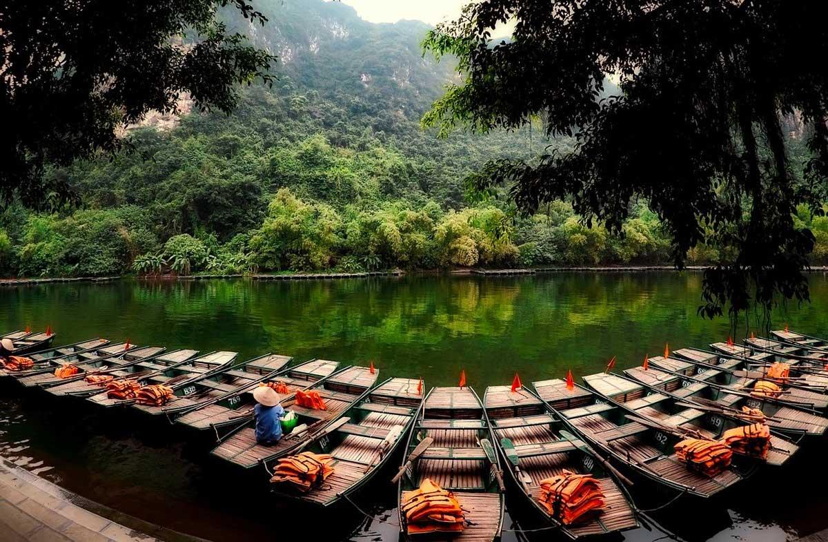 vietnam forest